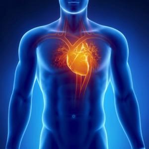 Afib- Heart-177545642