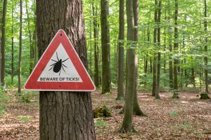 ticks, lymedisease, hiking, outdoors